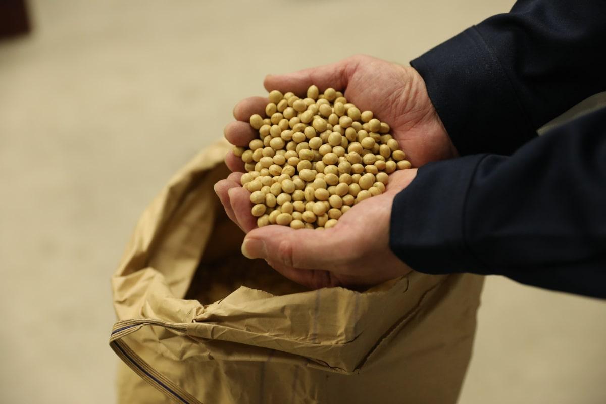 お醤油づくりに使用している大豆。