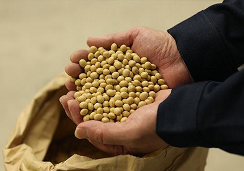 マルゴ有機農場 JONA有機認証(大豆・小麦)を取得