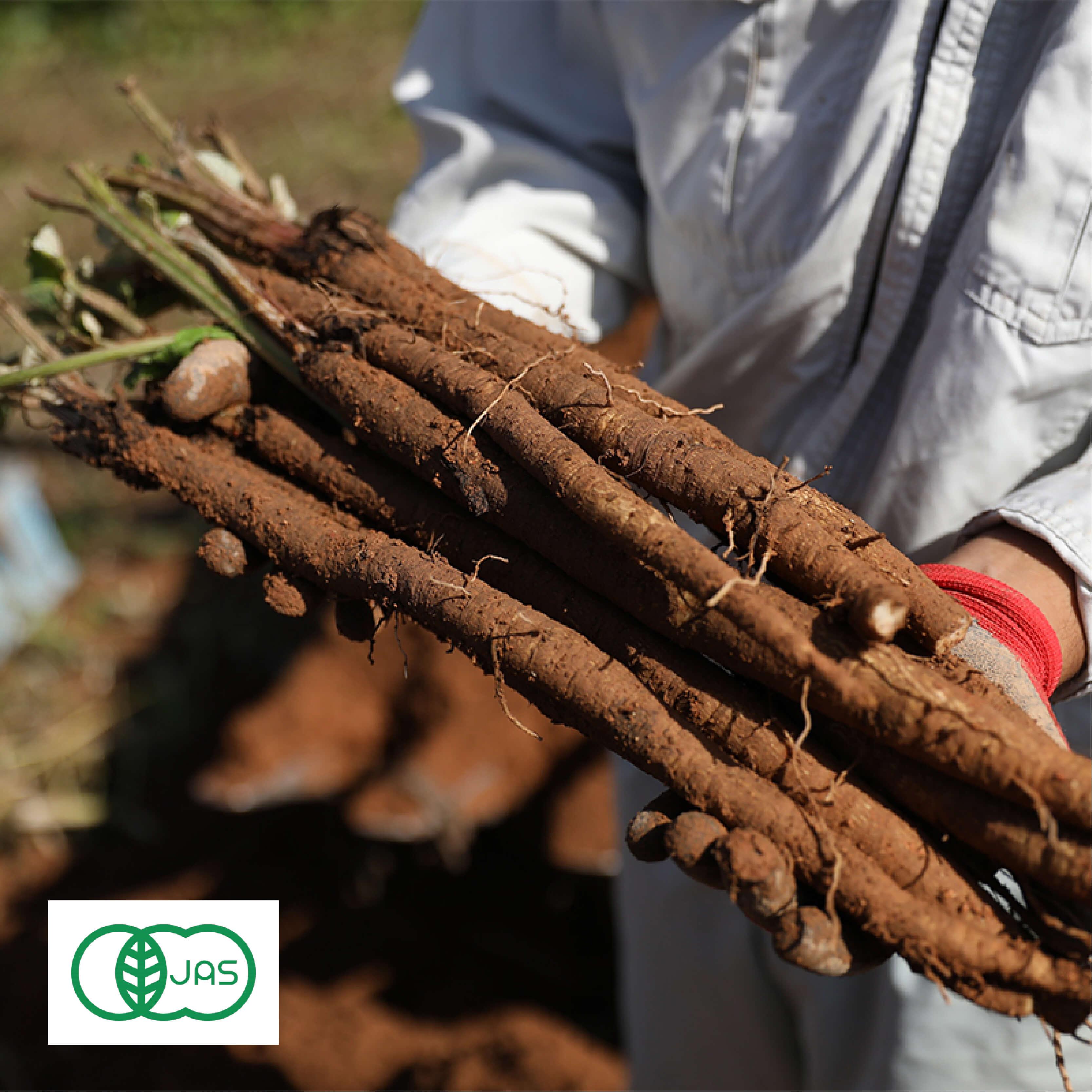 有機JAS認証を受けた寺岡有機農場の野菜