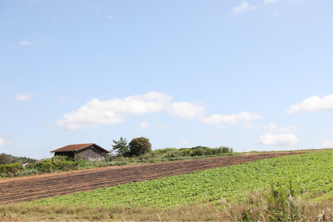 世羅農場の風景